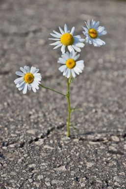 flowers-growing-out-of-the-concrete-photography91-copy